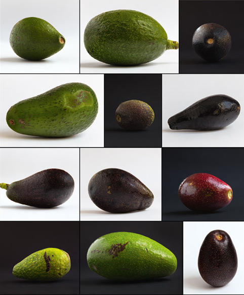 avocados of Equador